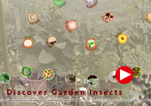Discover Garden Insects